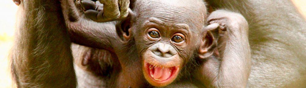 Bonobos UK